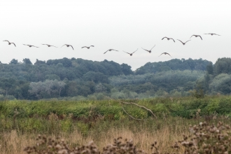 Birds flying over Croxall Lakes