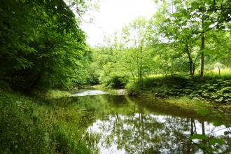 Castern Wood - Nature Reserve