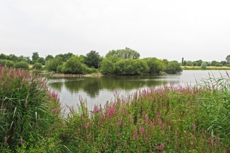 Croxall Lake - view of West Lake