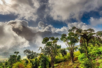African forest with clouds overhead