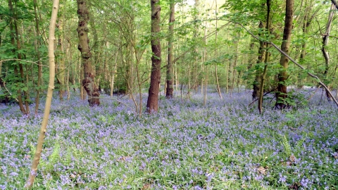 Hem Heath Woods