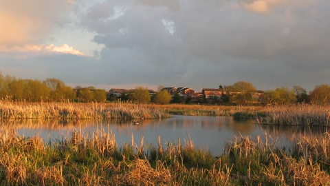 Doxey Marshes