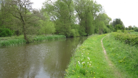 Radford Meadows - veiewed from canal