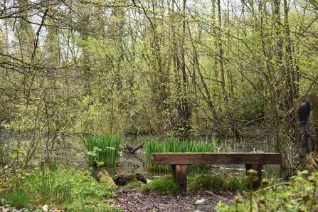 Hem heath woods