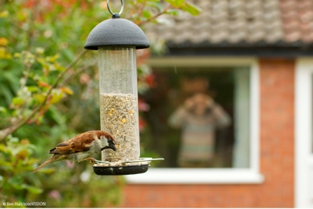 Bird on bird feeder