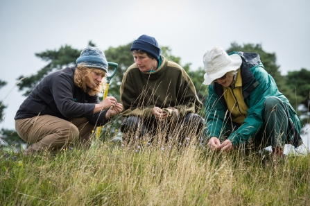 Opportunities we have for adults to get involved with wild places and wildlife