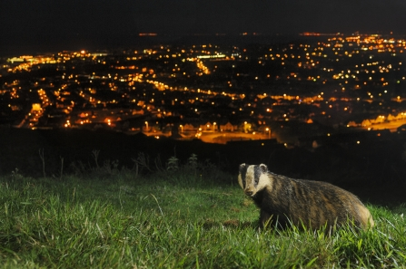Badger Appeal - please help
