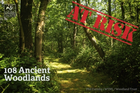 HS2 and ancient Woodlands