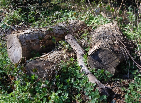 How to make a log pile