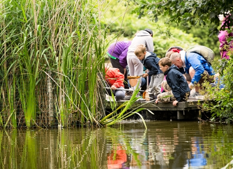 Pond dipping at Wolseley
