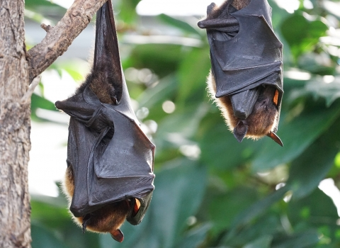 Bats hanging from a branch