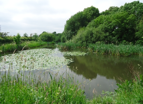 Staffordshire Trent Valley Catchment Based Approach Partnership