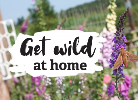 Get wild at home